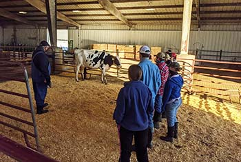 "College of the Ozarks dairy receives ""Excellent"" classifications, national rankings from Holstein Association U"